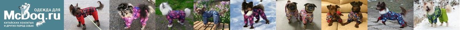 Одежда для китайской хохлатой 🐾 и других маленьких собак